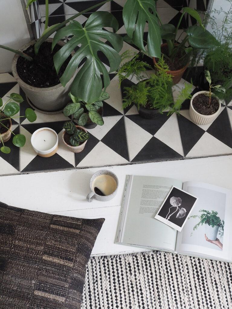 Semplici modi per applicare il design biofilico alla propria casa piante in casa